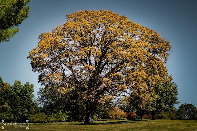 Jefferson Barracks, Tree, Trees, Leaves, Seasons, Seasonal, Photo Series, Leaves,